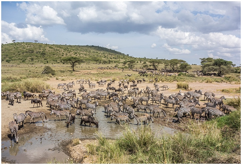 great migration the serengeti