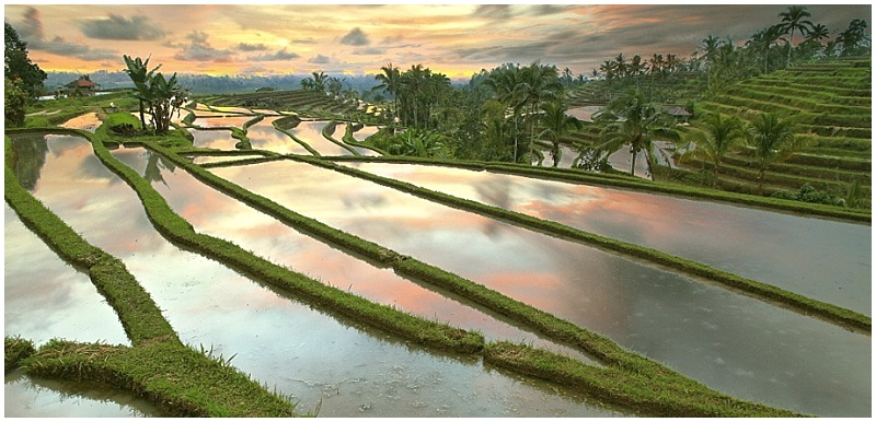 terraces Bali